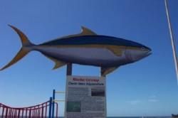 CleanSeas Aquaculture